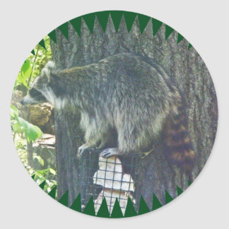 Mommy Raccoon on Suet Sticker