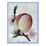 Momo (peach) Ukiyo-e. Postcards