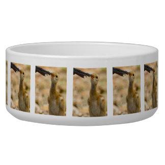 Mom's Foot Pet Water Bowl