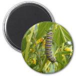 Monarca adaptable Caterpillar Imán