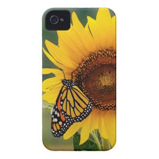 Monarca Butterfies en el girasol Case-Mate iPhone 4 Protectores