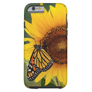 Monarca Butterfies en el girasol Funda De iPhone 6 Tough