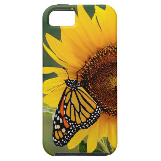 Monarca Butterfies en el girasol iPhone 5 Carcasa