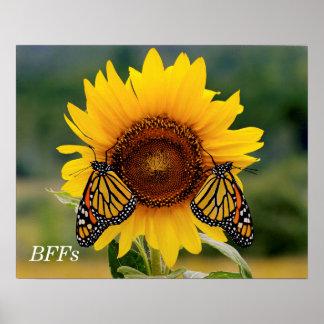 Monarca Butterfies en el girasol Posters