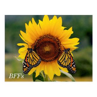 Monarca Butterfies en el girasol Postales