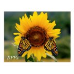 Monarca Butterfies en el girasol Tarjetas Postales