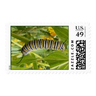 Monarca Caterpillar Sello