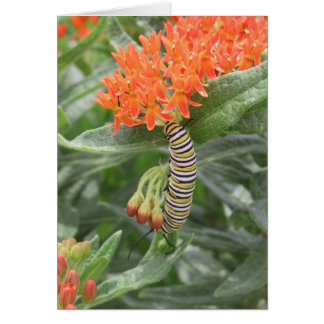 Monarca Catterpillar en mala hierba de mariposa Tarjeta De Felicitación