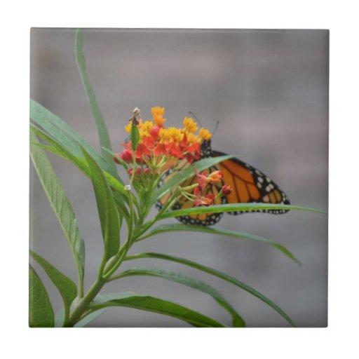 monarca del arbusto de mariposa detrás. azulejo cuadrado pequeño