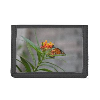 monarca del arbusto de mariposa detrás.
