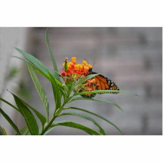 monarca del arbusto de mariposa detrás. esculturas fotograficas