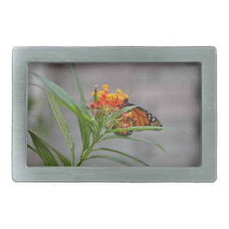 monarca del arbusto de mariposa detrás. hebilla de cinturón rectangular