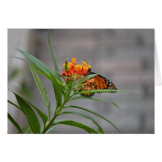 monarca del arbusto de mariposa detrás tarjetas