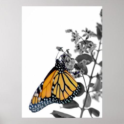 Monarca en el flor impresiones