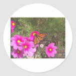 Monarca en la flor rosada brillante pegatinas