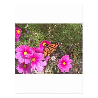 Monarca en la flor rosada brillante postales