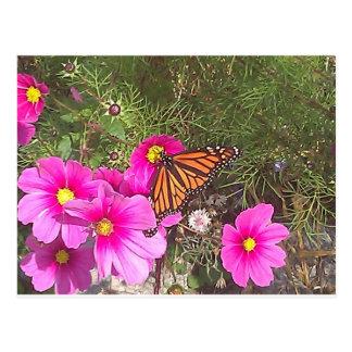 Monarca en la flor rosada brillante tarjetas postales