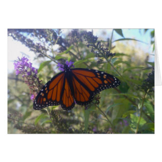 Monarca en la mariposa Bush Tarjeta De Felicitación