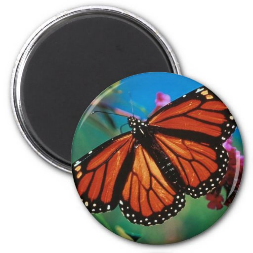 monarca-mariposas iman