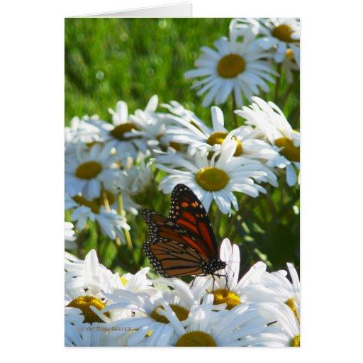 Monarca y margaritas tarjeta de felicitación