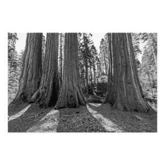 Monarcas del bosque (negro y blanco) arte fotográfico