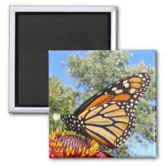 Monarch 38 ~ magnet
