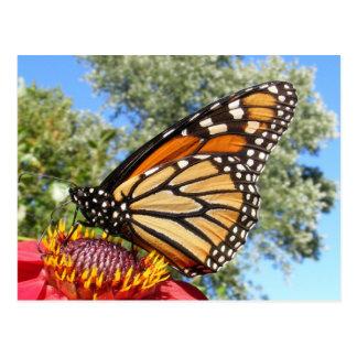 Monarch 38 ~ postcard