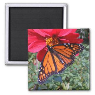Monarch 4 ~ magnet