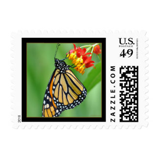 Monarch and Milkweed No3 Postage - Small