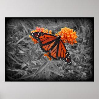 Monarch and Monochrome Poster