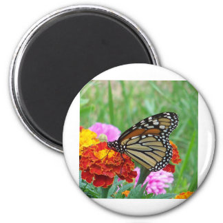 Monarch and the Marigolds 2 Inch Round Magnet
