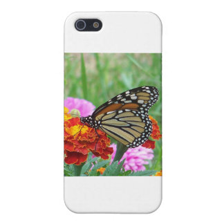 Monarch and the Marigolds Cover For iPhone SE/5/5s