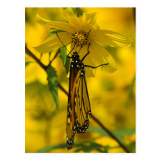 Monarch and Yellow Flower Postcard