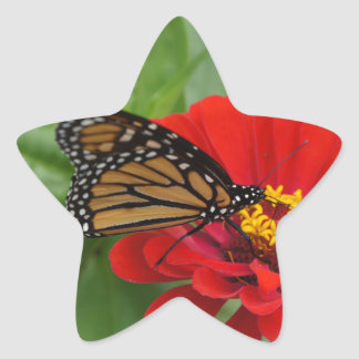 Monarch Beauty Star Sticker