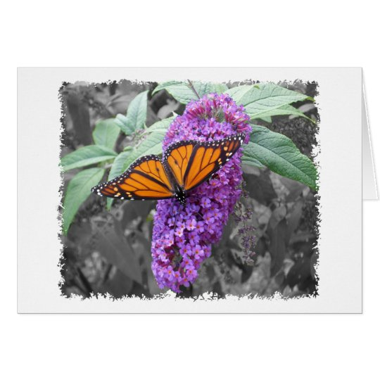 Monarch Blank Card