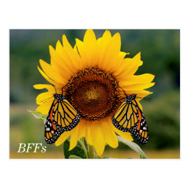 Monarch Butterfies on Sunflower Postcards at Zazzle
