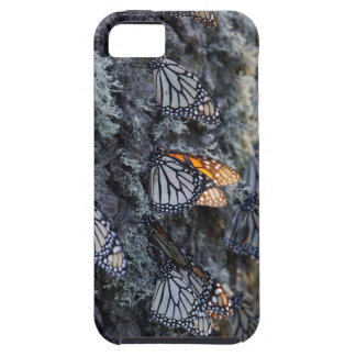 Monarch Butterflies on Pine Tree, Sierra Chincua 2 iPhone 5 Cover