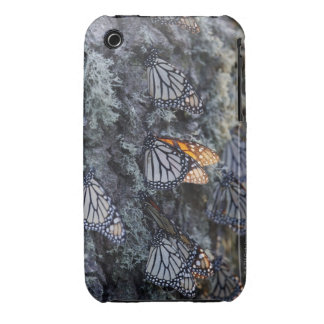 Monarch Butterflies on Pine Tree, Sierra Chincua 2 iPhone 3 Cases