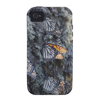 Monarch Butterflies on Pine Tree, Sierra Chincua 2 Case-Mate iPhone 4 Cases