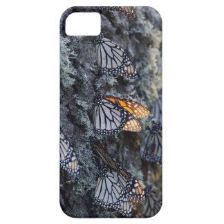 Monarch Butterflies on Pine Tree, Sierra Chincua 2 iPhone 5 Covers