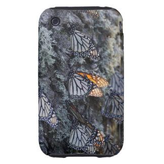 Monarch Butterflies on Pine Tree, Sierra Chincua 2 iPhone 3 Tough Covers