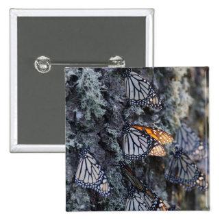 Monarch Butterflies on Pine Tree, Sierra Chincua 2 Pinback Button