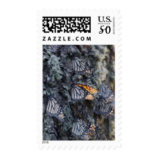 Monarch Butterflies on Pine Tree, Sierra Chincua 2 Postage