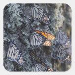 Monarch Butterflies on Pine Tree, Sierra Chincua 2 Stickers