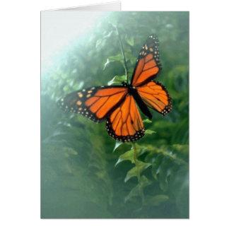 Monarch Butterfly (2) Card