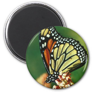 Monarch Butterfly 2 Inch Round Magnet