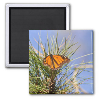 Monarch Butterfly 2 Inch Square Magnet