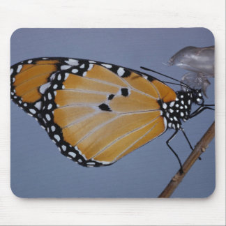 Monarch Butterfly (3) Mouse Pad