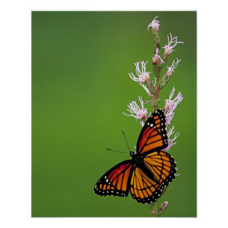 Monarch Butterfly and Blazing Star Flowers Poster
