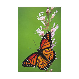 Monarch Butterfly and Flower On Green Background Canvas Print